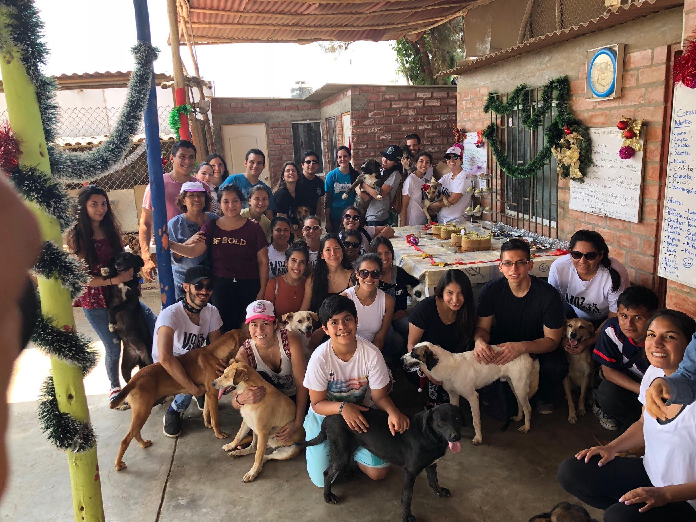 volontariat dans un refuge d u0026 39 animaux
